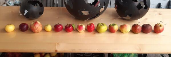 Apfelvielfalt für den Garten